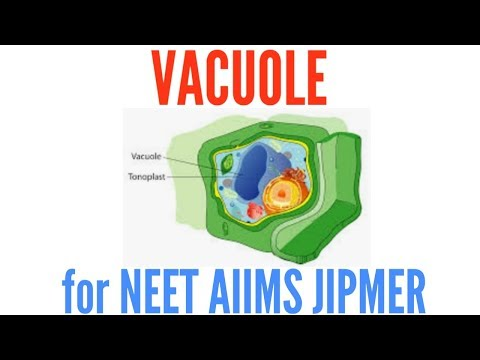 Vacuole: Structure And Functions