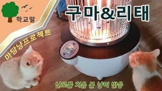 [마당냥프로젝트]고양이형제(캣브라더)고구마&서리…