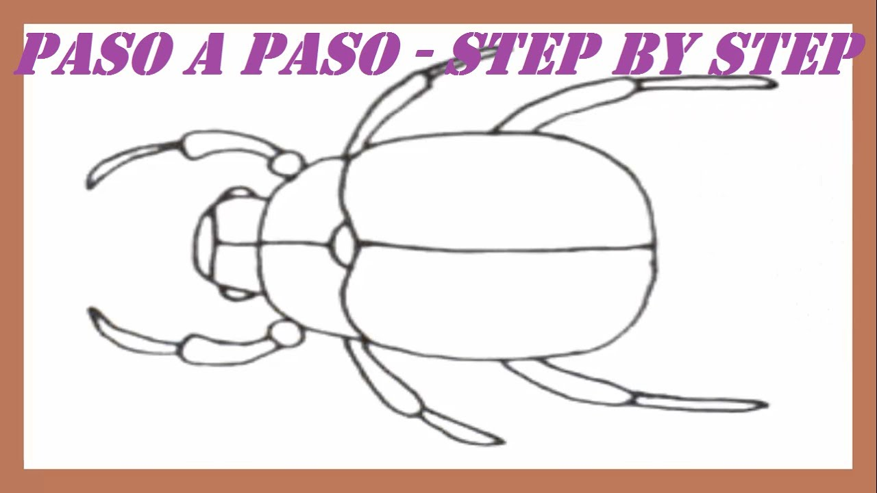 how to draw a beetle step by step