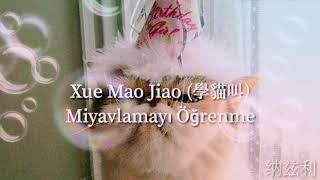 Chinese song turkish translate #chinese #çince #çeviri #miyav #meow #pinyin #hanzı #tonlama #learn #china #translete #song
