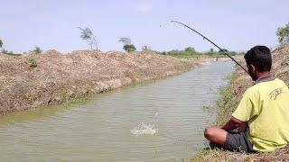 Fish hunting || Tilapia fish catch