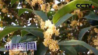 [中国新闻] 壮丽70年 奋斗新时代·安徽金寨 | CCTV中文国际