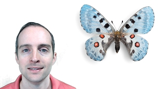 Day 102! The Butterfly Effect! How Does Each Decision Have Unlimited Power?