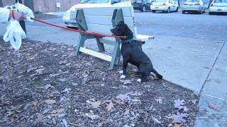 Oscar The Pound Dog Learning To Play - Mahoning County Dog Pound - Nov 8 2014