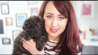Meet Our New Puppy Maddie (& Puppy Haul!) | Gemsmaquillage
