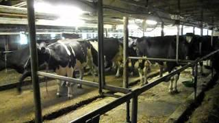 Vermont Dairy farm.