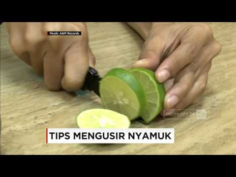 Tips Mengusir Nyamuk - Good Morning