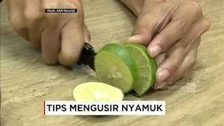 Video Tips Mengusir Nyamuk - Good Morning download MP3, 3GP, MP4, WEBM, AVI, FLV Agustus 2018