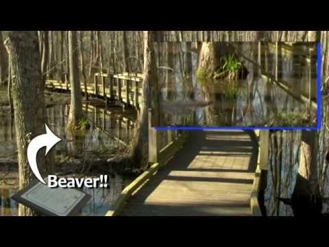 Alabama Nature: Montevallo's Ebenezer's Swamp