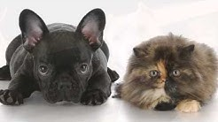 Pet Friendly Hotels Dallas, Texas