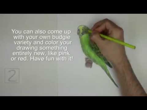 Karakalem Muhabbet Kusu Cizimi Youtube
