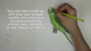 Karakalem Muhabbet Kuşu Çizimi