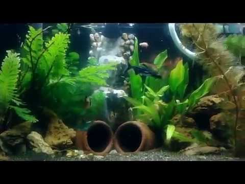 New aquarium fish tank design sand wall youtube for New fish tank