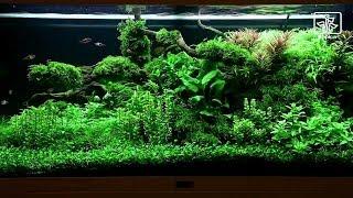 Bitkili Akvaryum Yapımı