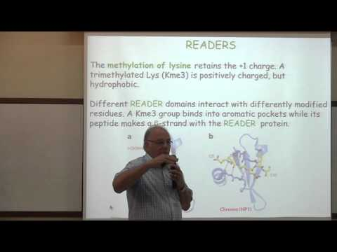 Transcription of DNA