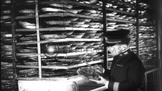 Life aboard the American troopship, SS Leviathan, during World War I. HD Stock Footage