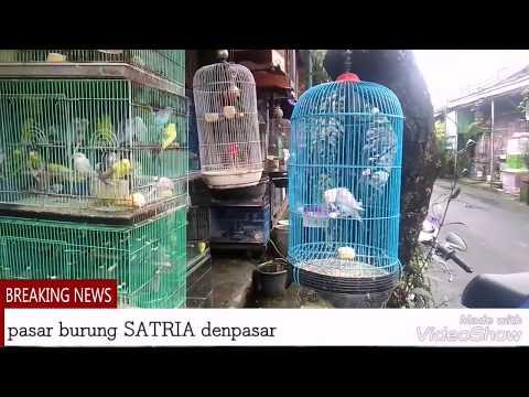 pasar hewan satria denpasar bali(berburu burung)