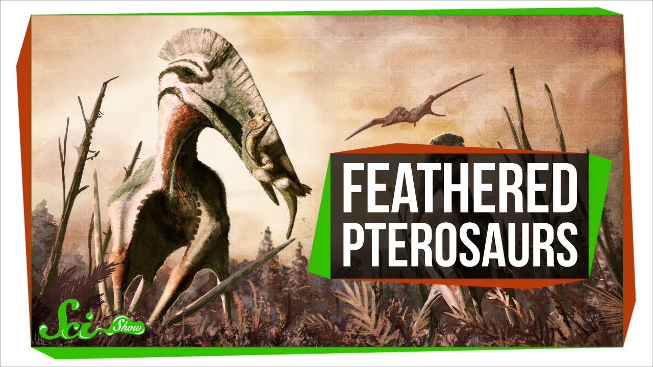 feathered-reptiles-ruled-earth-s-skies-twice-scishow-news