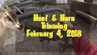 Hooves & Horns Trimming -  February 4, 2018