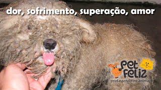 Cãozinho Victor, dor, sofrimento, superação e amor!!! Uma lição de vida!!