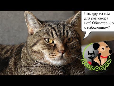 Вопрос: Сколько еды в день нужно активному взрослому коту?