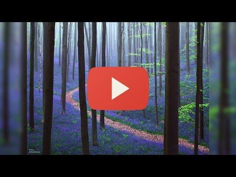 Vicissitudes of forest sex смотреть онлайн