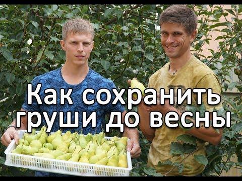 Простой способ сохранить яблоки и груши до весны
