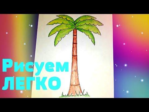 Как нарисовать пальму? РИСУНКИ ДЛЯ ДЕТЕЙ
