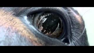 Вымирание 2015 P WEB DLRIP AVC  =DoMiNo=