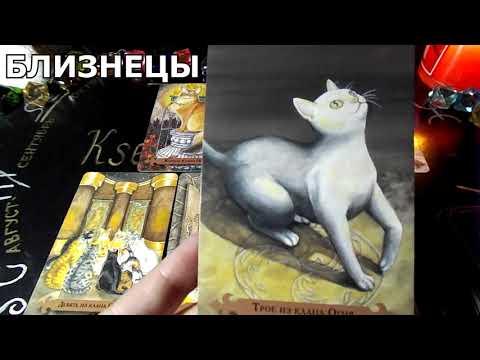 Гороскоп на неделю с 12 по 18 августа 2019 года на картах ТАРО Мистических кошек!