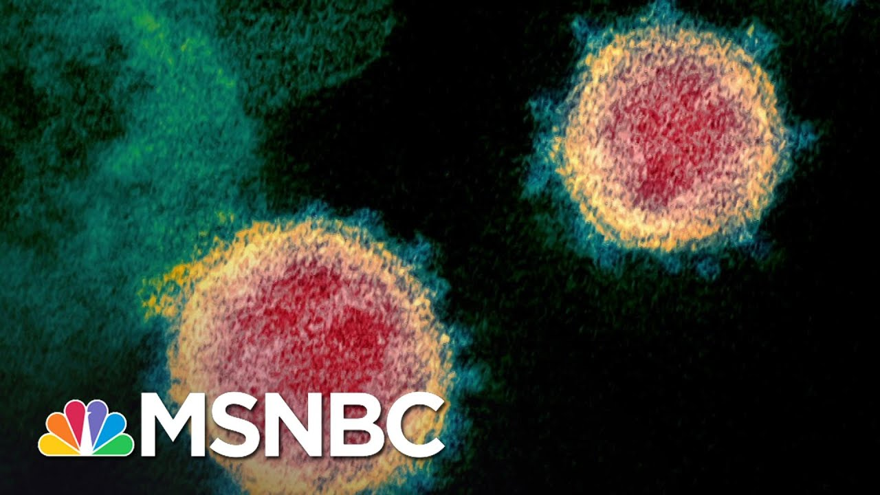 Infectious Disease Expert's Plan To Crush Coronavirus In 10 Weeks | The 11th Hour | MSNBC