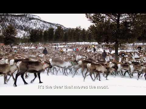 Climate justice in Sápmi: Jonas Vannar, Reindeer herder