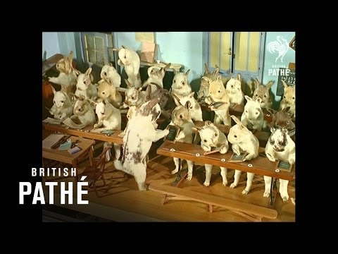 Crazy Taxidermy Museum - Stuffed Animals in Costumes (1965)