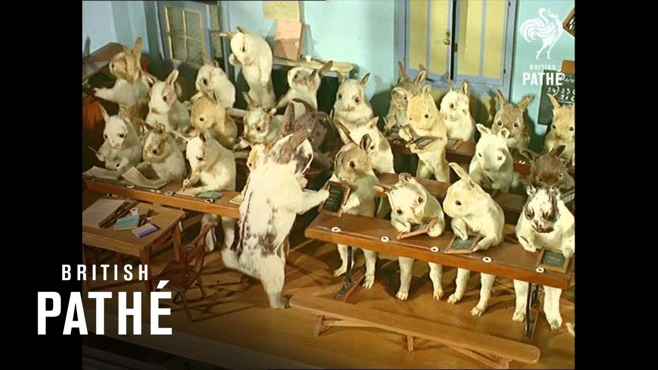 crazy taxidermy museum stuffed animals in costumes 1965 youtube