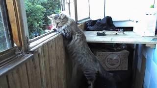 Соня смотрит в окно и грустит