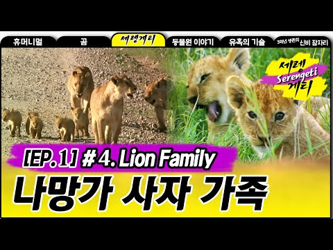 Lion Family - Wildlife in Serengeti EP01, #04, 나망가 사자 가족