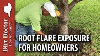 Root Flare Exposure for Homeowners