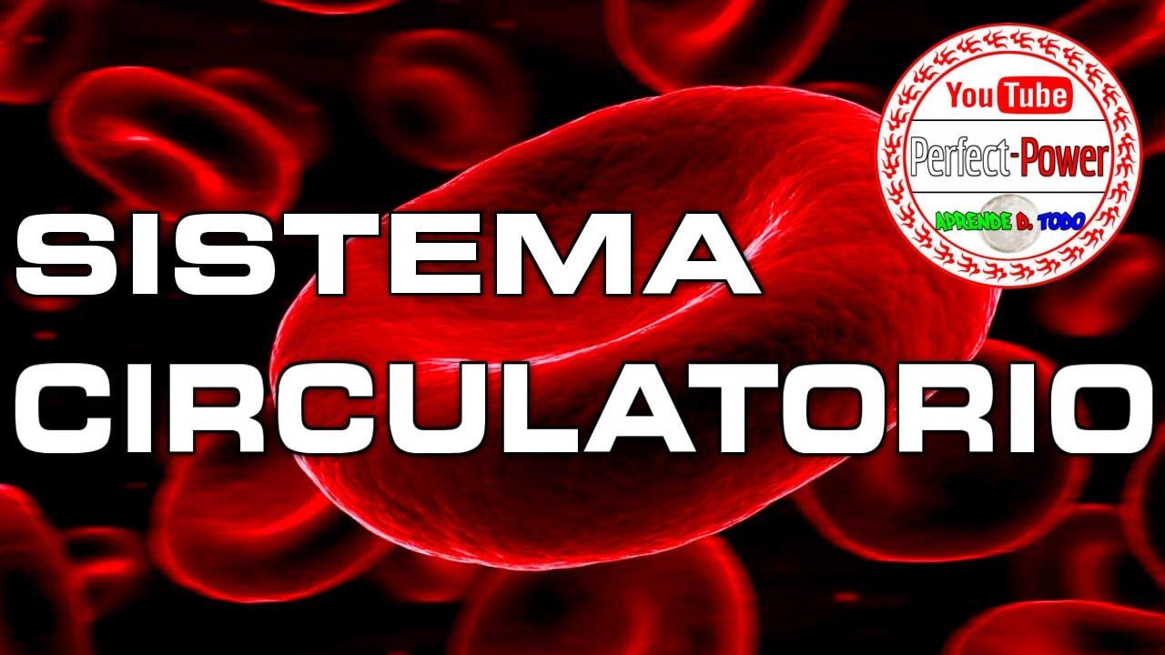 Sistema circulatorio / cardiovascular (PowerPoint\