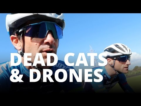 Dead cats and Drones
