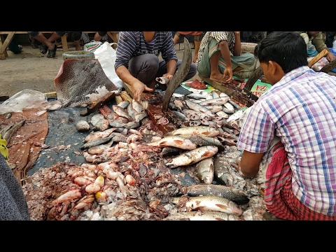 Ridiculous Fish Cutting Section in Side of Road Karwan Bazar Fish Market | Part 02