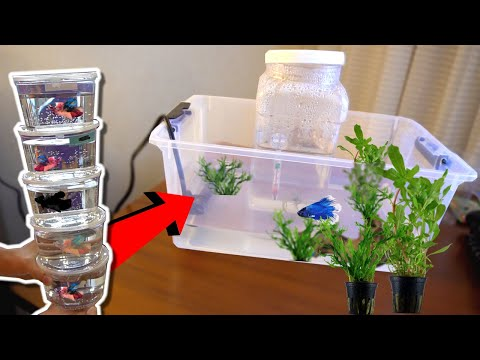 How To RESCUE Sick BETTA FISH!