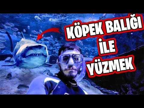 KÖPEK BALIĞI DOLU HAVUZA GİRDİM!! ft. Fırat Sobutay