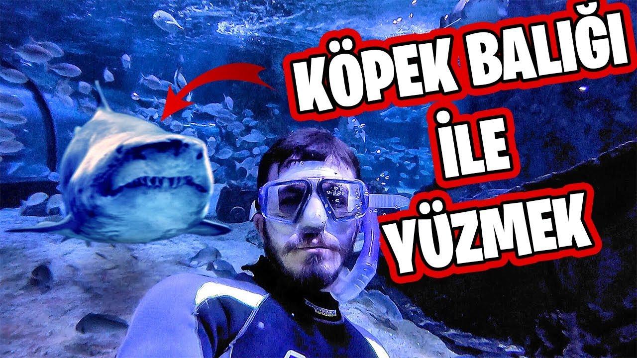 KÖPEK BALIĞI DOLU HAVUZA GİRDİM!!