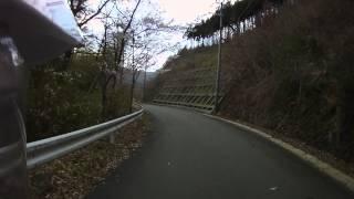 日吉ダム北岸の桜並木