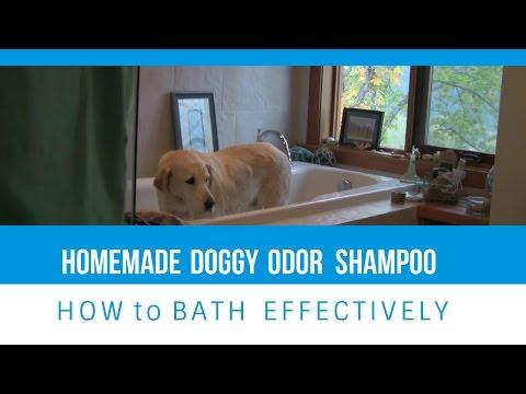 Homemade Dog Shampoo and How To Give a Dog a Bath!