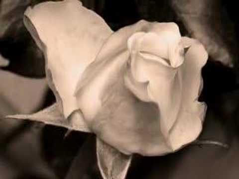 Acqua 'e rose - Pino Daniele