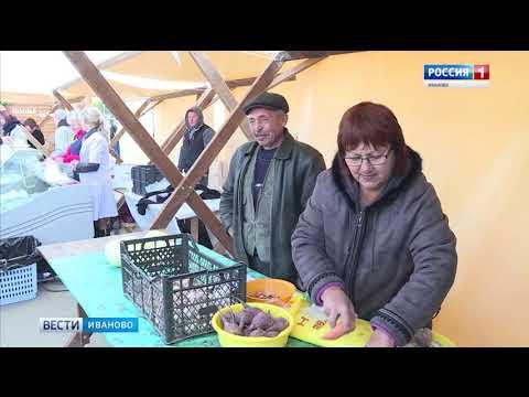 Более 50 фермеров и сельхозпредприятий: в Иванове прошла ярмарка-выставка «Золотая осень»
