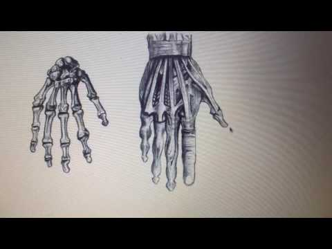 Comic book visual art form human anatomy practice