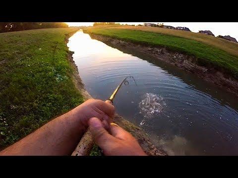 Katy, TX Bayou Fishing (Multi-species)