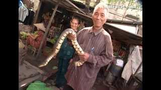 Snakes and Reptiles, Vietnam by Asiatravel.com